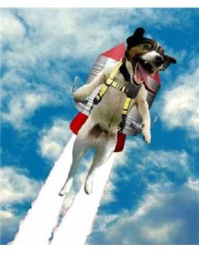 I have been to the pinnacle of Space Mountain and on the horizon of Tomorrowland I saw dogs in jetpacks.